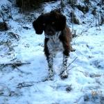snö hundar