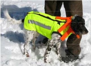 skyddsväst till hund